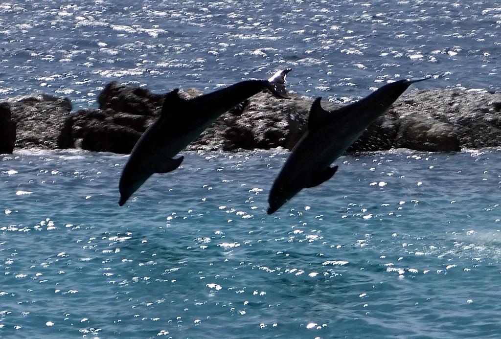 Curacao Island PJ2/IW1FC DX News