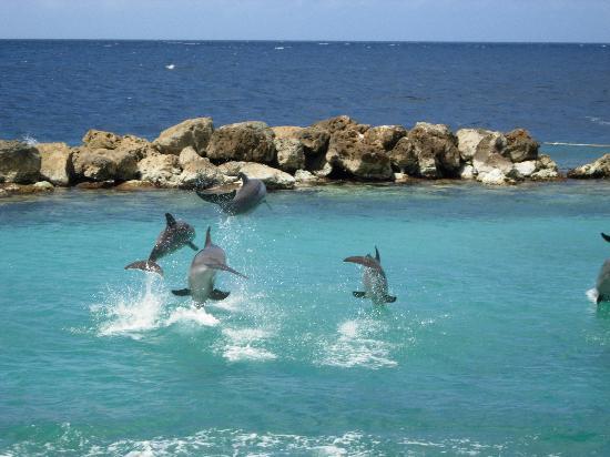 Кюрасао PJ2/K9SG Дельфины