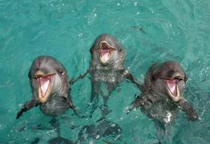 Кюрасао PJ2/OE3JAG Дельфины