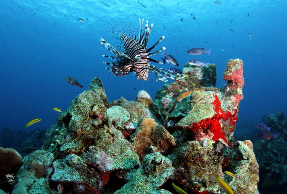 Curacao Island PJ2/PA7JWC PJ2/PD7DB