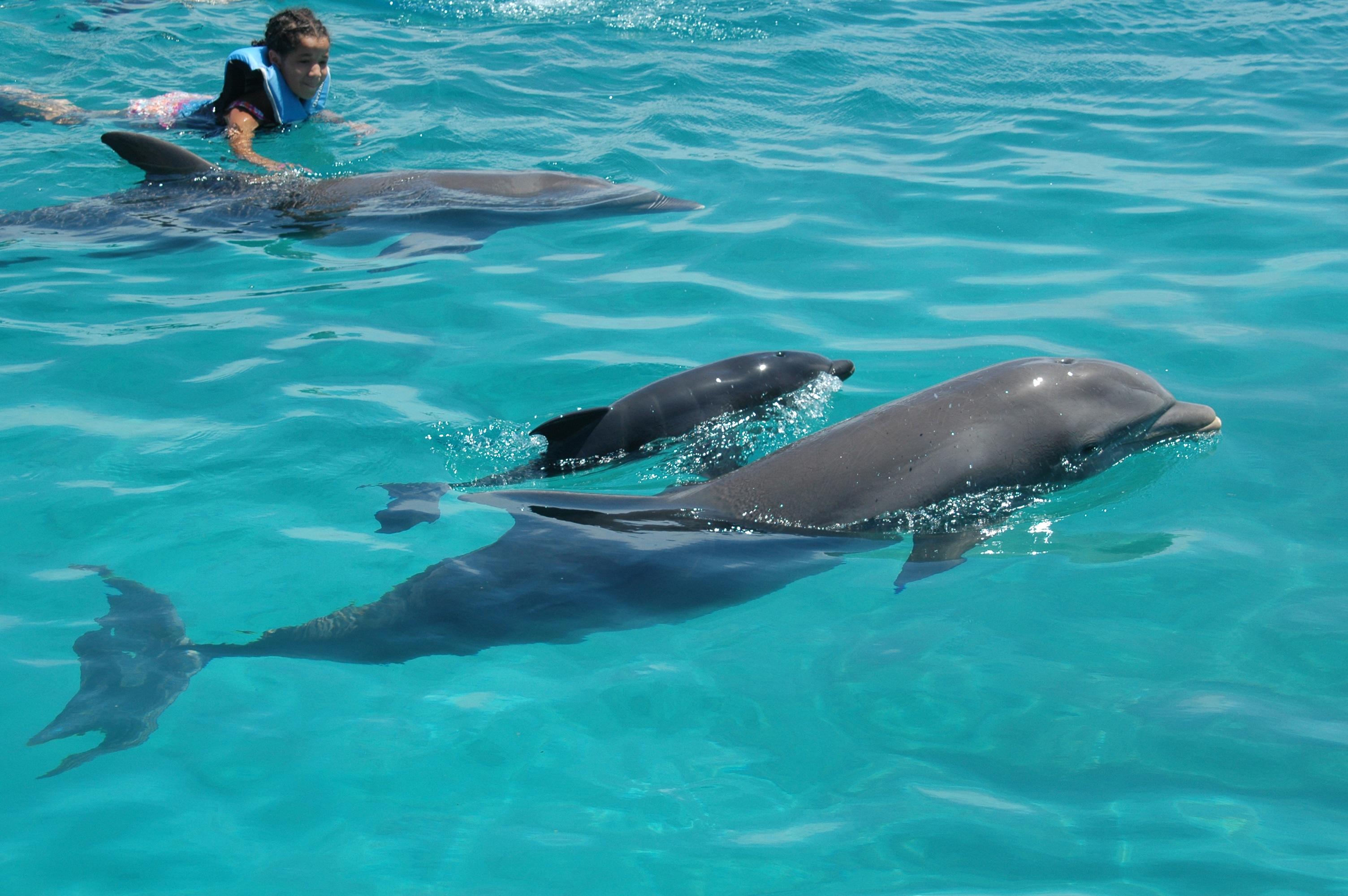 Curacao Island PJ2/W5MPC DX News Dolphins
