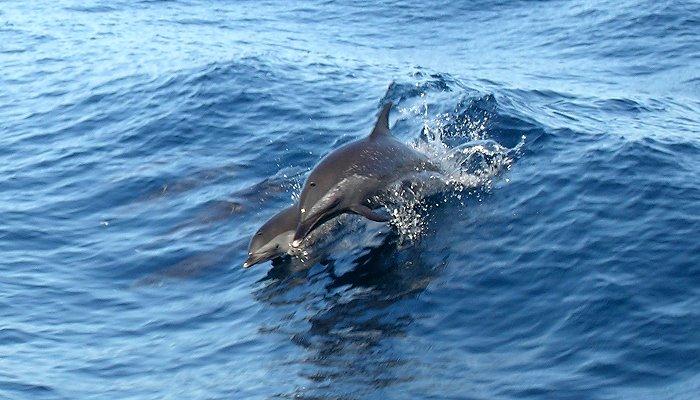 Curacao Island PJ2N DX News