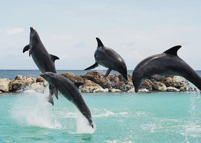 Curacao Island PJ2T K6AM