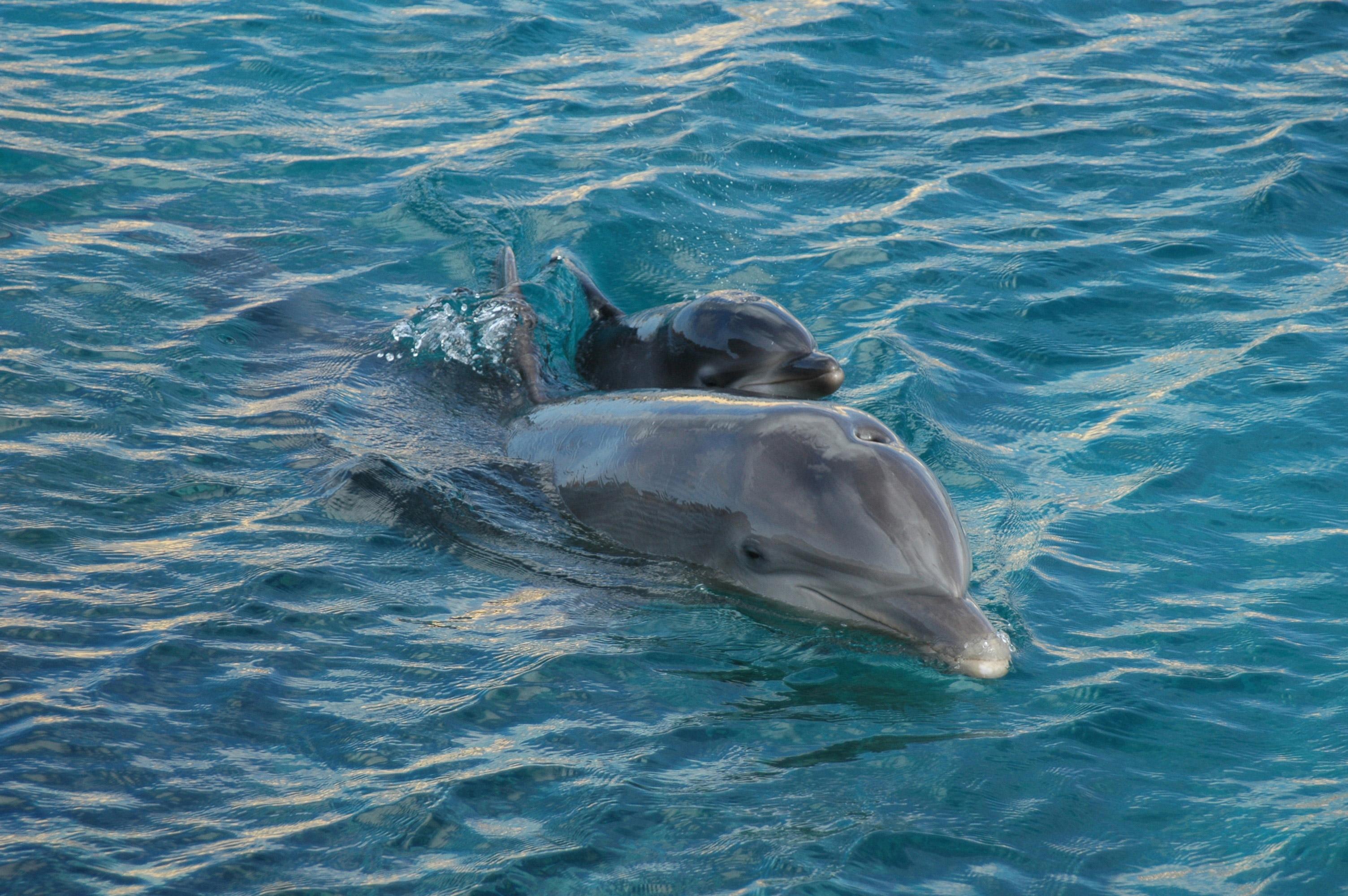 Curacao Island PJ2T PJ2DX Dolphins