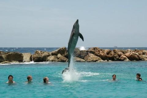 Curacao PJ2/K9SG Dolphin