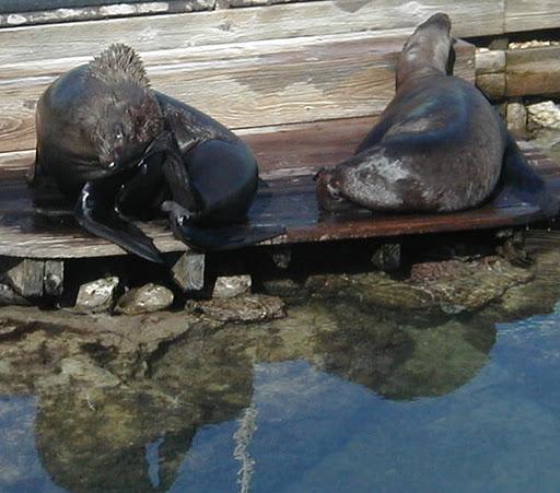 Кюрасао PJ2T Туристические Достопримечательности Морские Львы