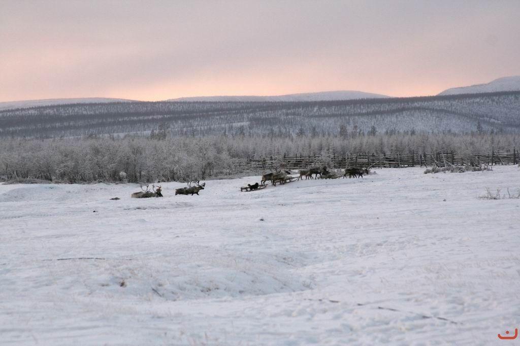 Deers RDA