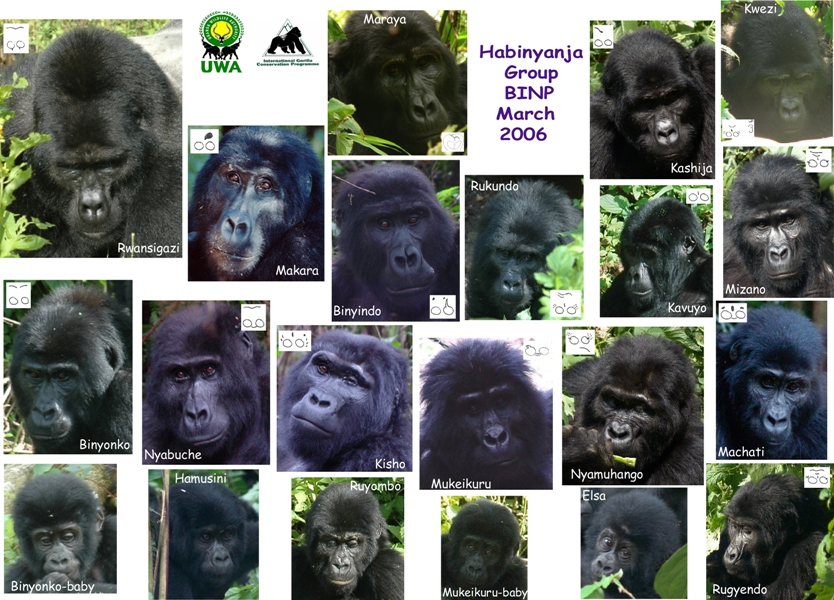 Democratic Republic Congo Gorillas