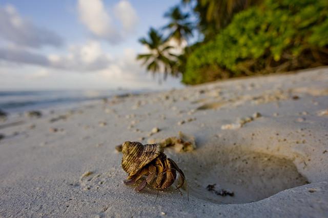 Остров Диего Гарсия Архипелаг Чагос VQ9HF