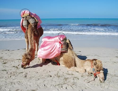 Djerba Island 3V8SM