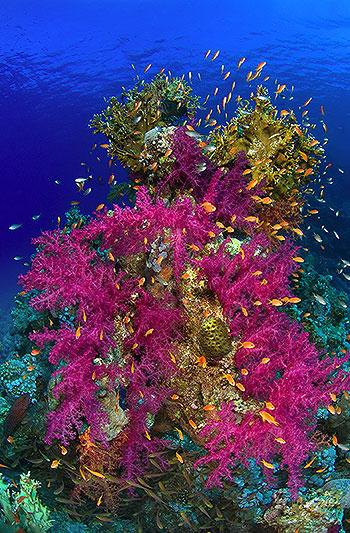 Джибути J28JV Кораллы