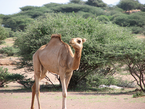 Djibouti J28AA