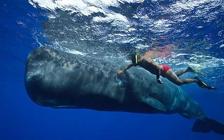Dominica Island J73CCM Whale