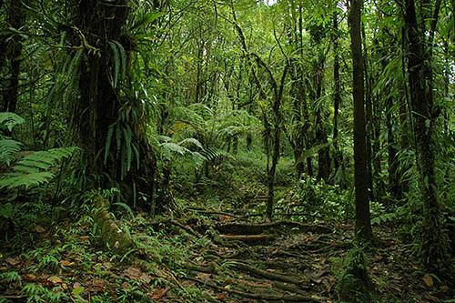Dominica Island J7A J79FCG Forest