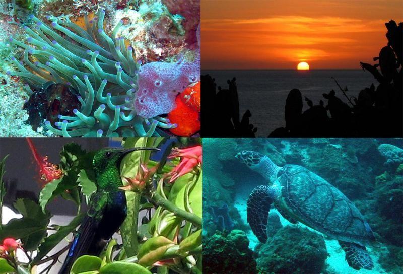 Dominica Island J7Y 2014