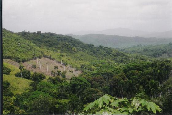 Доминиканская Республика Джунгли HI9/IZ4AFW