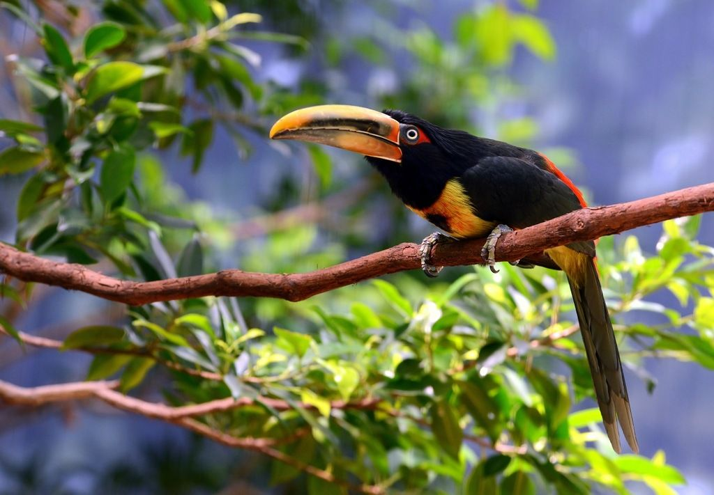 Эквадор HC2TWA