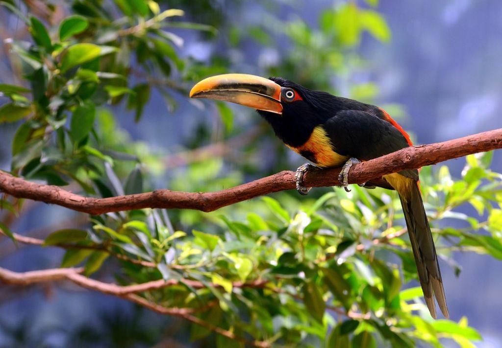 Ecuador HC2TWA