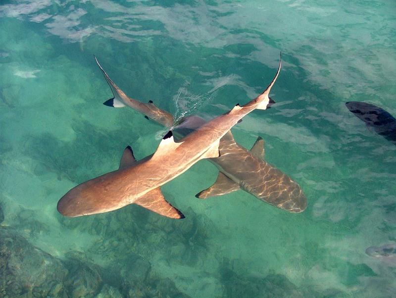 Efate Island Vanuatu YJ0AGK Sharks