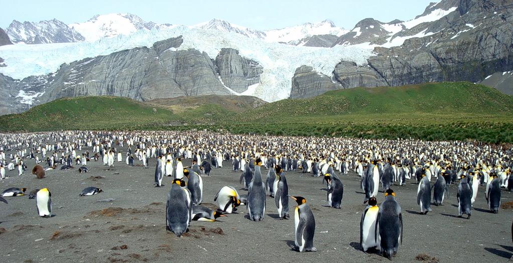 Фолклендские острова VP8DNT DX Новости