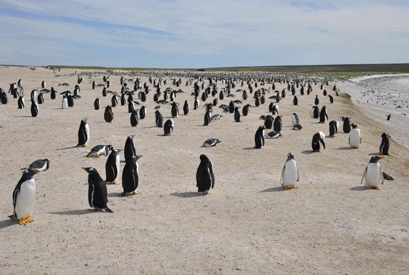 Фолклендские острова VP8DNY