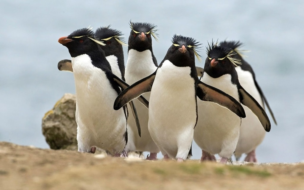 Falkland Islands VP8DNY DX News