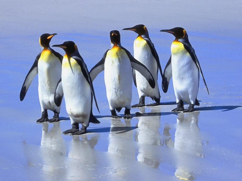 FalklandIslands