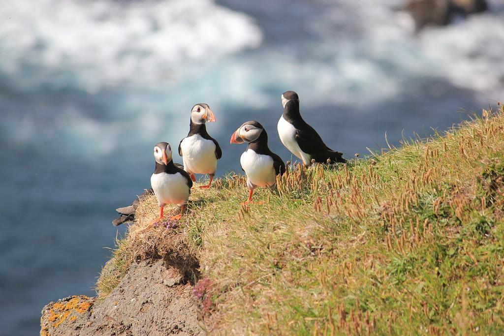 Faroe Islands OW75FOC