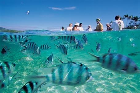 Fiji Islands 3D2IR 3D2AD