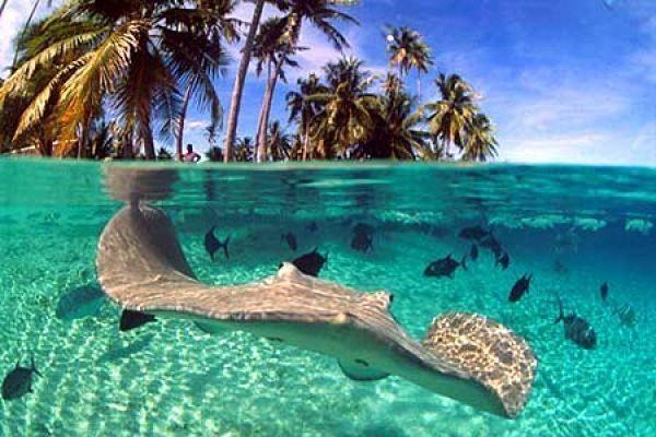 Fiji Islands 3D2OX