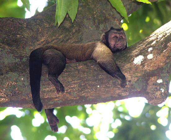French Guiana FY/F5UII DX News Tourist Attractions