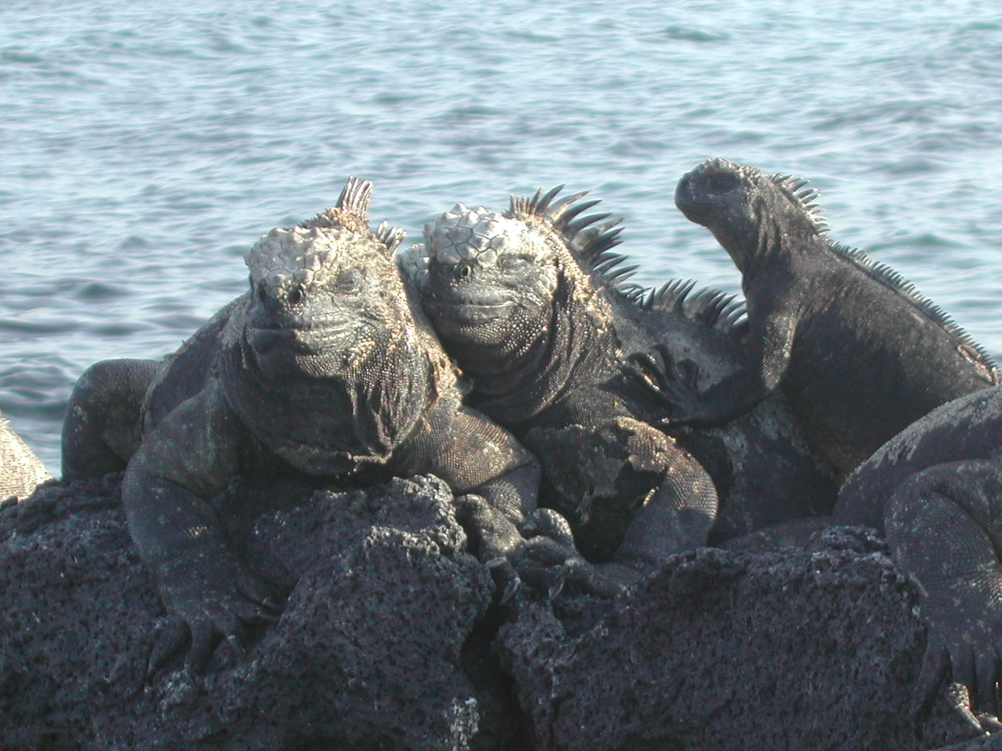 Galapagos Islands DX News HC8A