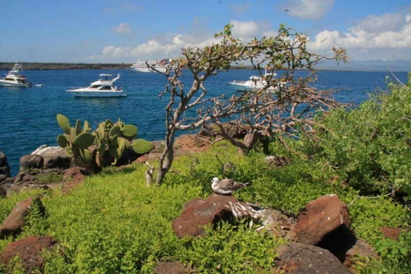 Galapagos Islands HC2AO/8 DX News