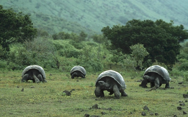 Galapagos Islands HC2IWM/8