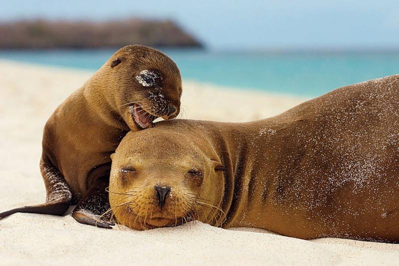 Galapagos Islands HC8/HC6EP