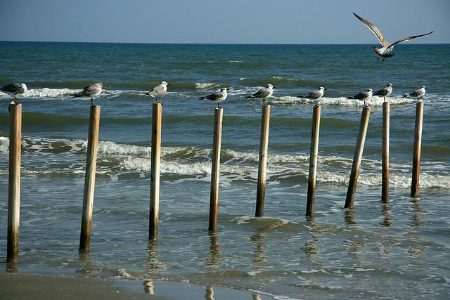 Galveston Island KT3Q/5