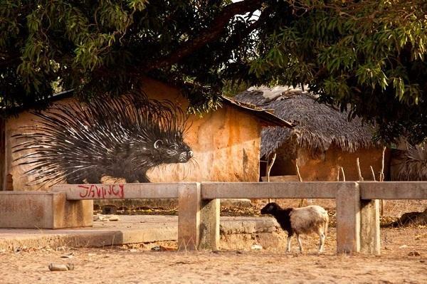Гамбия C5WP Туристические достопримечательности