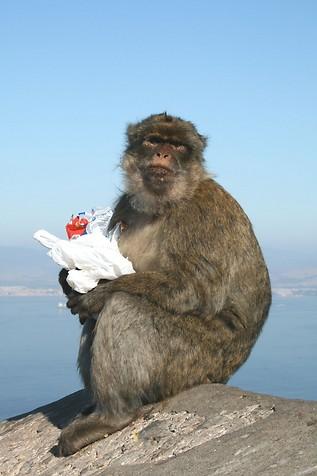 Gibraltar ZB2X