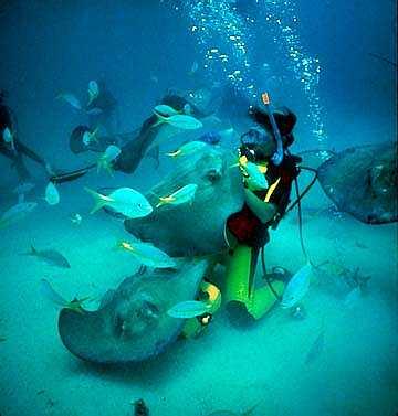 Grand Cayman Island Cayman Islands ZF2AH