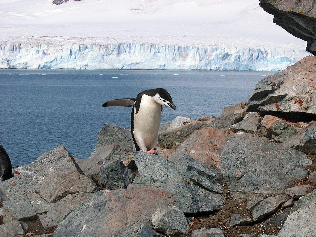Half Moon Island South Shetland Islands Antarctica DX News LU1ZS