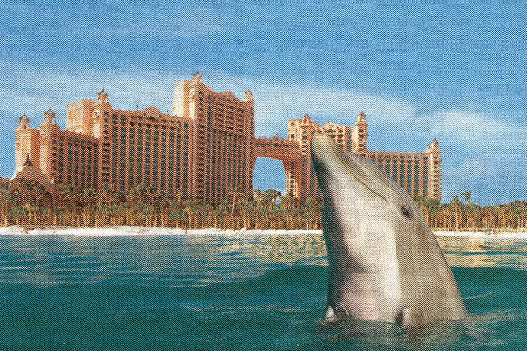 Dolphin Cay In The Premises Of Atlantis Hotel Paradise Island