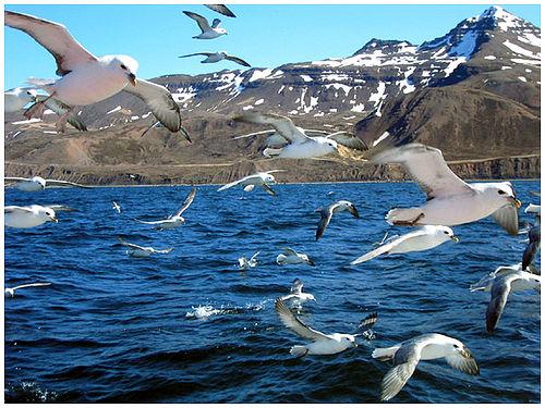 Исландия TF/DL5NUA