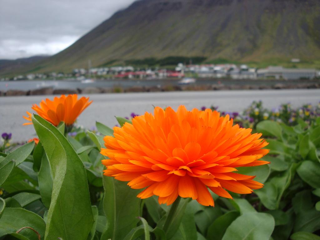 Iceland TF/SP5IXI DX News