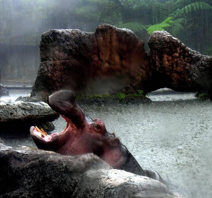 Джакарта Сафари Парк YB0/WK1S Индонезия