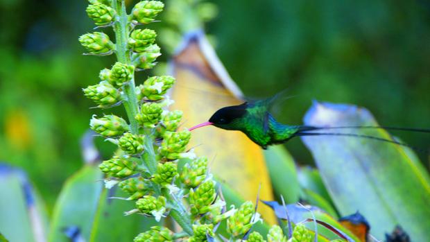 Jamaica OE3GEA/6Y5 Colibri