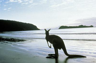 Kangaroo Island VK5ZMM VK5AUQ
