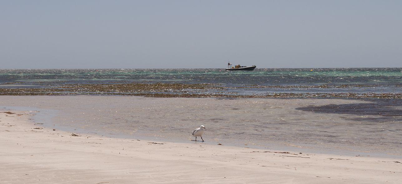 Kangaroo Island Photo Gallery 1 DX News
