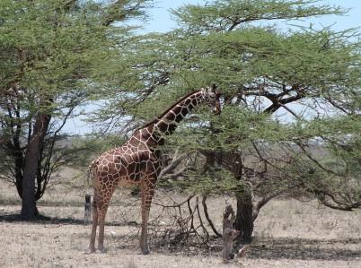 Kenya 5Z1N