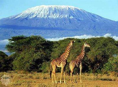 Кения Килиманджаро 5Z4/G4OHX Жирафы
