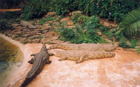 Kenya 5Z4/IZ4AKS Crocodile Farm